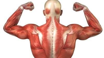 Названы самые полезные продукты для здоровья мышц