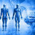 Украинские ученые нашли способ лечения травм позвоночника