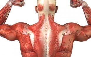 Мышечная дистрофия: признаки, по которым можно её распознать?