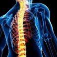Специалисты разрабатывают гибкие скобы для лечения искривления позвоночника