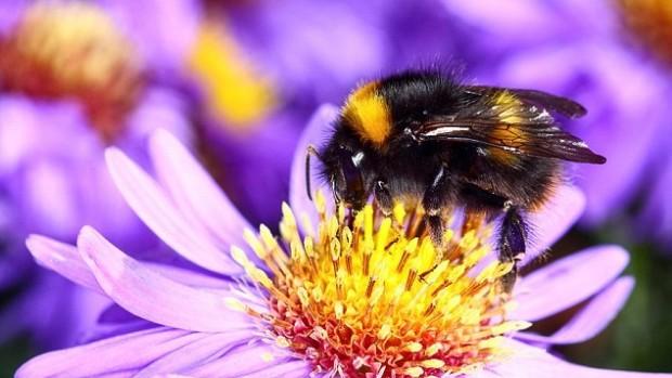 Пчелиный яд может облегчить симптомы артрита