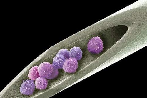 Создан хрящ из стволовых клеток