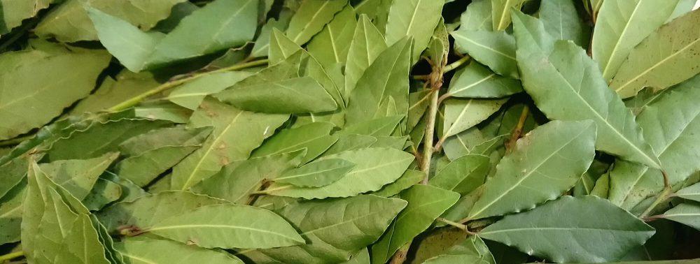 Как лечить суставы лавровым листом?