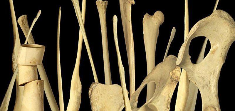 В теле человека найдена потерянная в ходе эволюции 207 кость