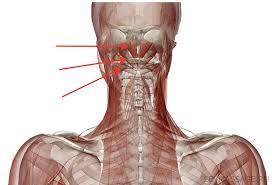 Ощущаете хруст в челсти? — Поверьте суставы на артрит