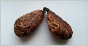 Использование бобровой струи при лечении артрита и артроза