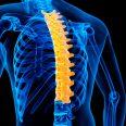 Как устроен грудной отдел позвоночника