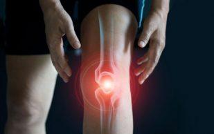 Стволовые клетки от сухожилия помогут с заживлением ран