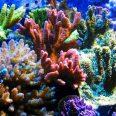 Коралловые рифы могут стать лекарством при болезнях костей