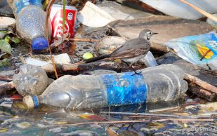 6 причин для отказа от пластиковых бутылок