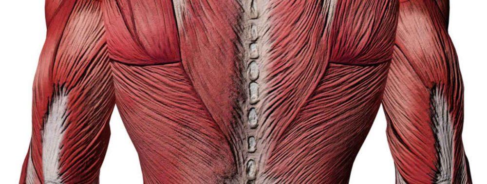 Упражнения защищают от боли в спине, улучшая состояние межпозвонковых дисков