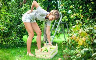 Как избежать боли в спине и суставах после работы в саду и огороде