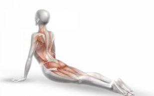 4 позы йоги, которые уменьшат боли в спине