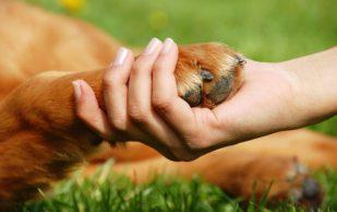 Кошки и собаки облегчат боли в суставах