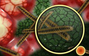 Кишечный микробиом предсказывает течение ревматоидного артрита